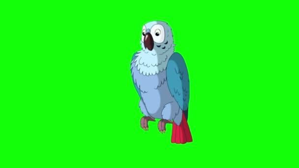Modrý papoušek mluvící.