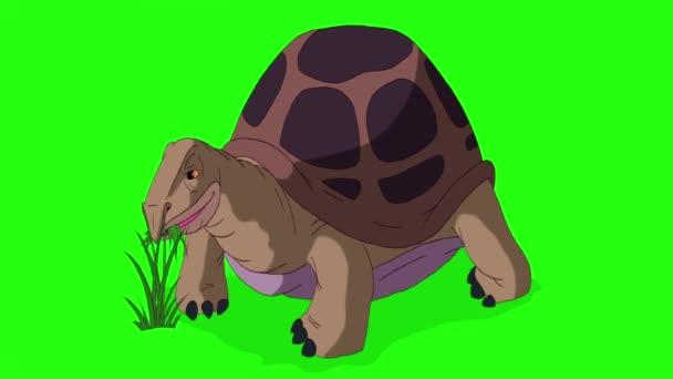 Nagy barna elefántteknős füvet eszik. Kézzel készített animációs felvételek izolálva zöld képernyőn
