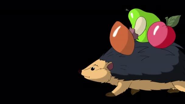 Ježek chodí a nosí jablka a houby. Ručně animované smyčkové záběry izolované s alfa kanálem.