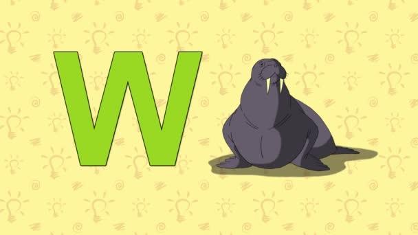 Walrus. English ZOO Alphabet - letter W