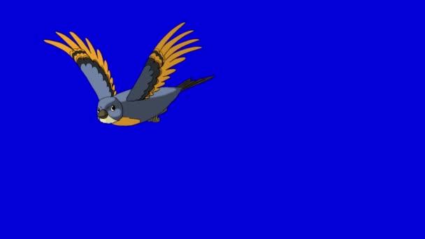 Bluebird venire volo e Vola via