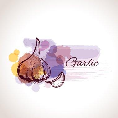 garlic label watercolor