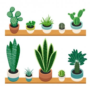 Set of cactuses and succulents in pots on a shelfs.