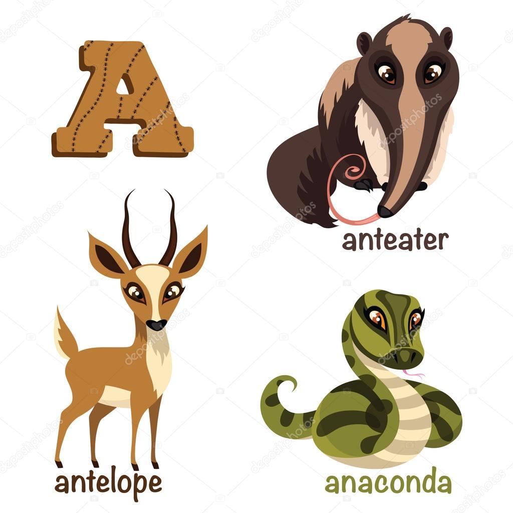 alphabet animals anteater anaconda antelope u2014 stock vector