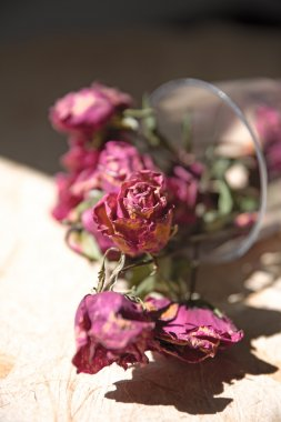 Withered roses in a vase