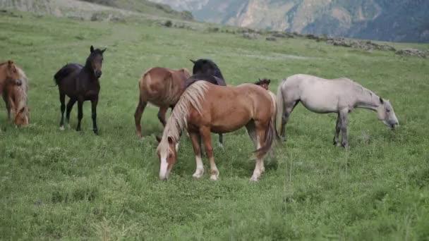 Stádo koní na zelených loukách v horách v Altai