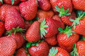 Fotografie čerstvé zralé jahody dokonalé celoobvodové pozadí