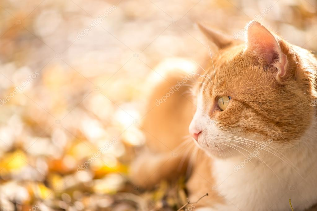 Beautiful cat looking on the side