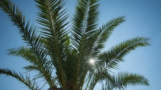 zelené palmové listy