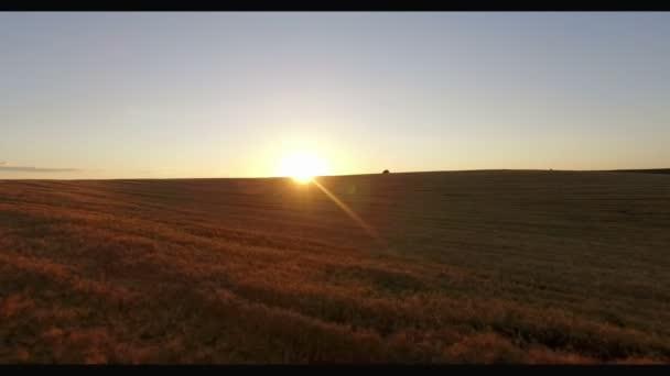 Dolly letecký pohled létání nad pšeničné pole slunce večer