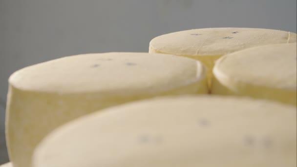Kulatý sýr zrání na policích ve sklepě farmy. Datum výroby sýra