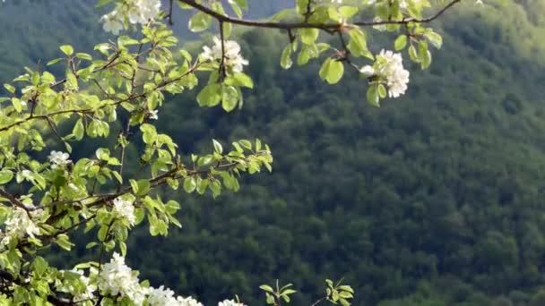 Natur-Komposition. Apfel-Blüten auf einem hohen Berg-Hintergrund