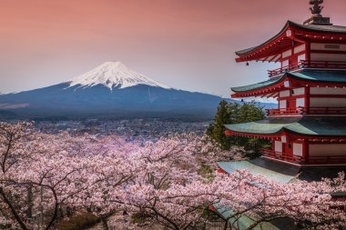 Chureito Pagoda with sakura & Beautiful Mt.fuji View