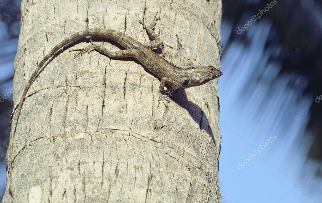 medium lizard in wild nature on palm tree