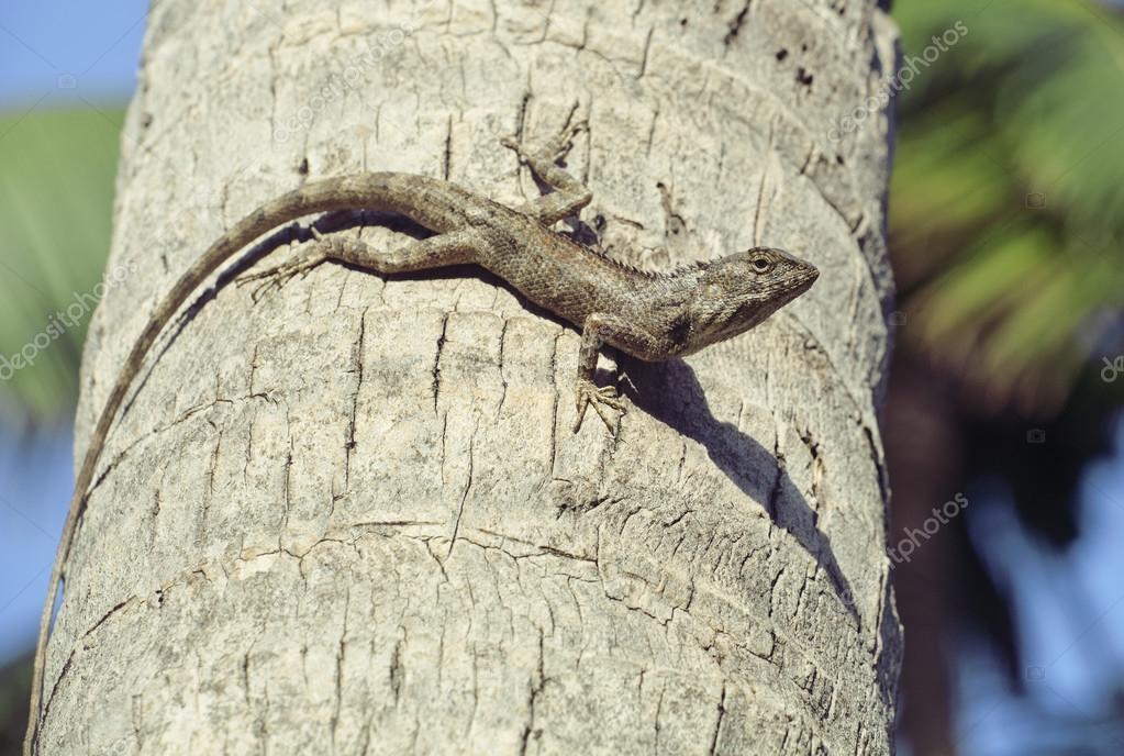 medium lizard in wild nature on palm tree