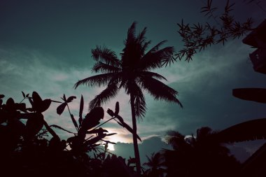 silhouette of asian exotic jungle, palms and other trees on blue