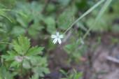 white flower among green grass macro photo