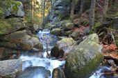 flusso dautunno nella foresta