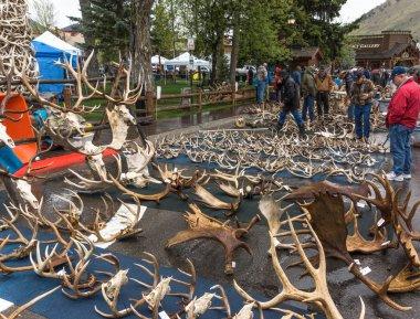 Elk antler auction.