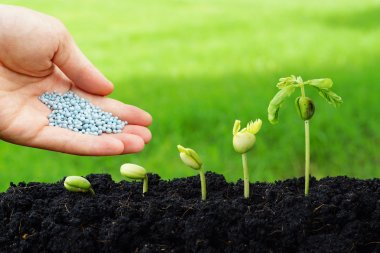 Hand giving chemical fertilizer to plants