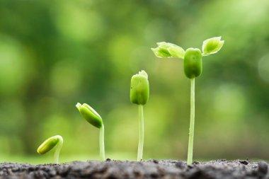 trees growing on fertile soil