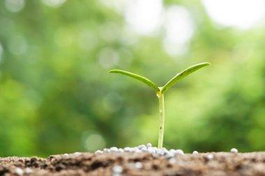 plant seedling growing