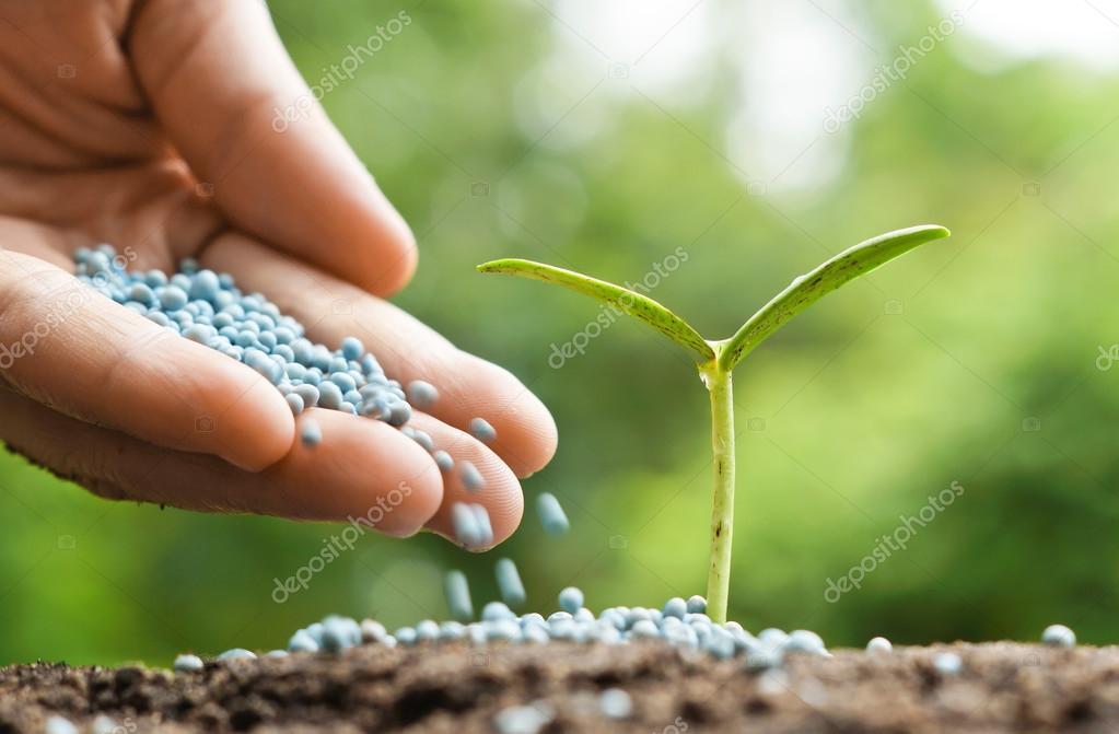 Mano di un contadino dare fertilizzante al giovane pianta for Un fertilizzante