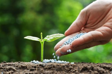 hand of a farmer giving fertilizer to young green plant