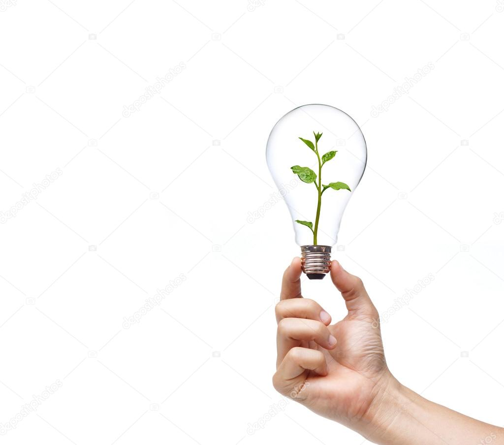 hand holding a light bulb with a green plant