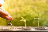 mano di innaffiare le piante di giovane bambino