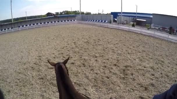 na koních. Hladil koně. Astride na koně letní