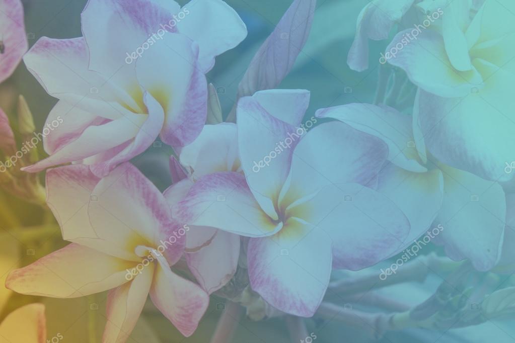 flowers in soft light