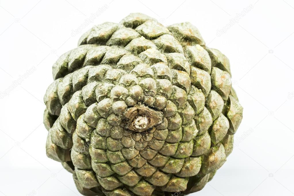 Pine cone geometry
