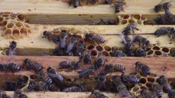 Méhek a fa bee hive keretek