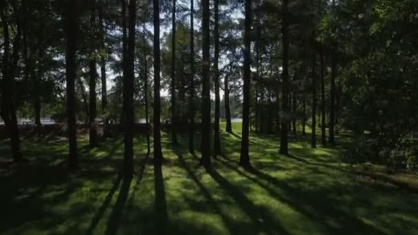 Létající koryto lesa