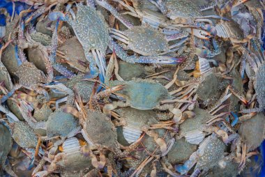 Blue swimming crab on the market.