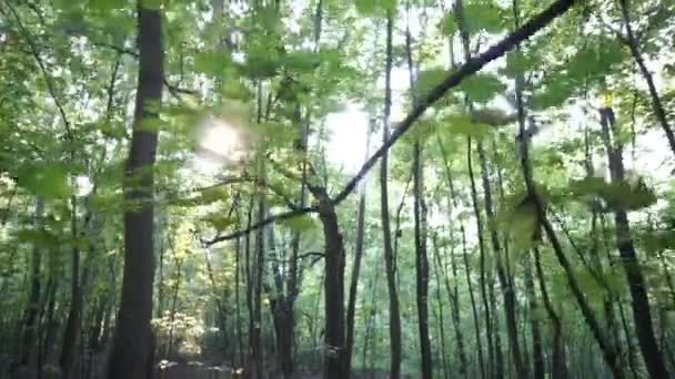 Nap áttörve fák