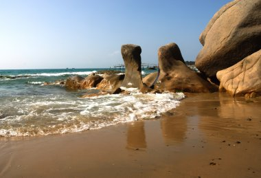 Strange rocks and moss in the morning at Co Thach beach, Tuy Phong, Binh Thuan province, Vietnam