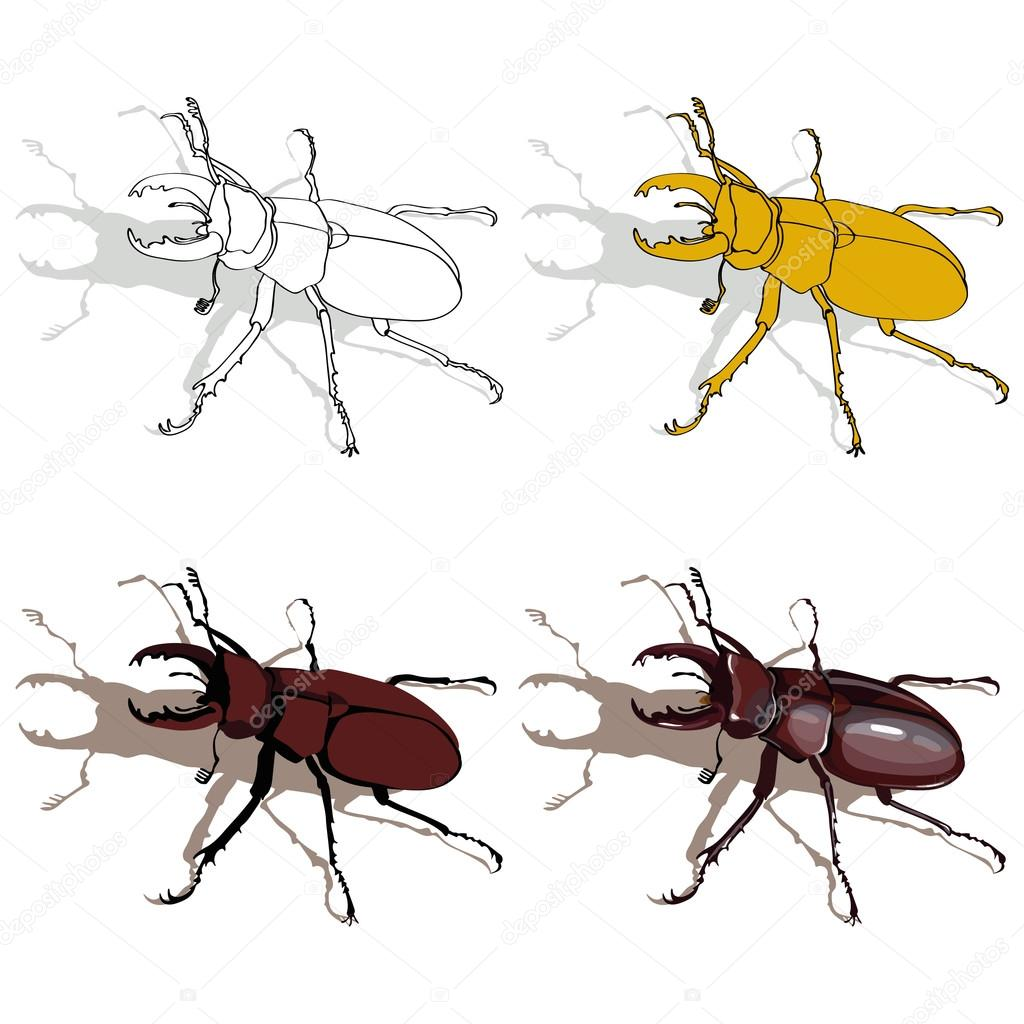 Stag beetle vector drawing