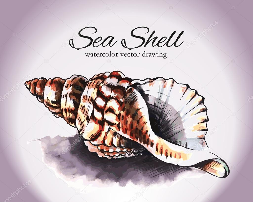 Sea Shell Watercolor Vector Drawing