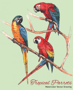 Three Bright Macaw Parrots on a Branch (Watercolor Vector Drawing)