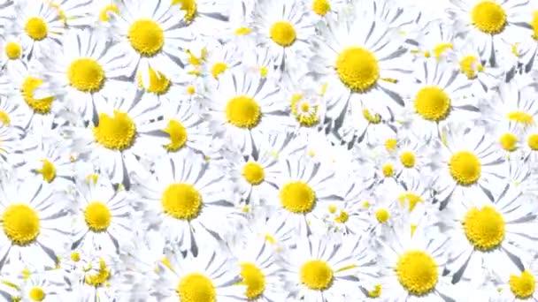 pozadí bílé květy