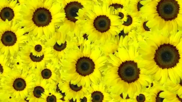 pozadí žluté květy