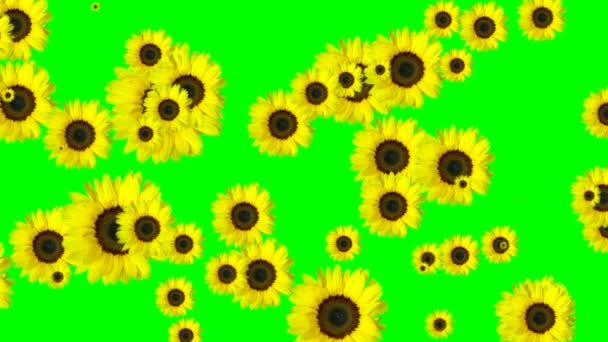 Zelená obrazovka květy přechod