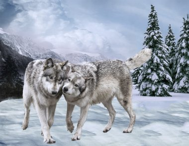 Couple of happy wolfs Against mountains and the wood . Winter