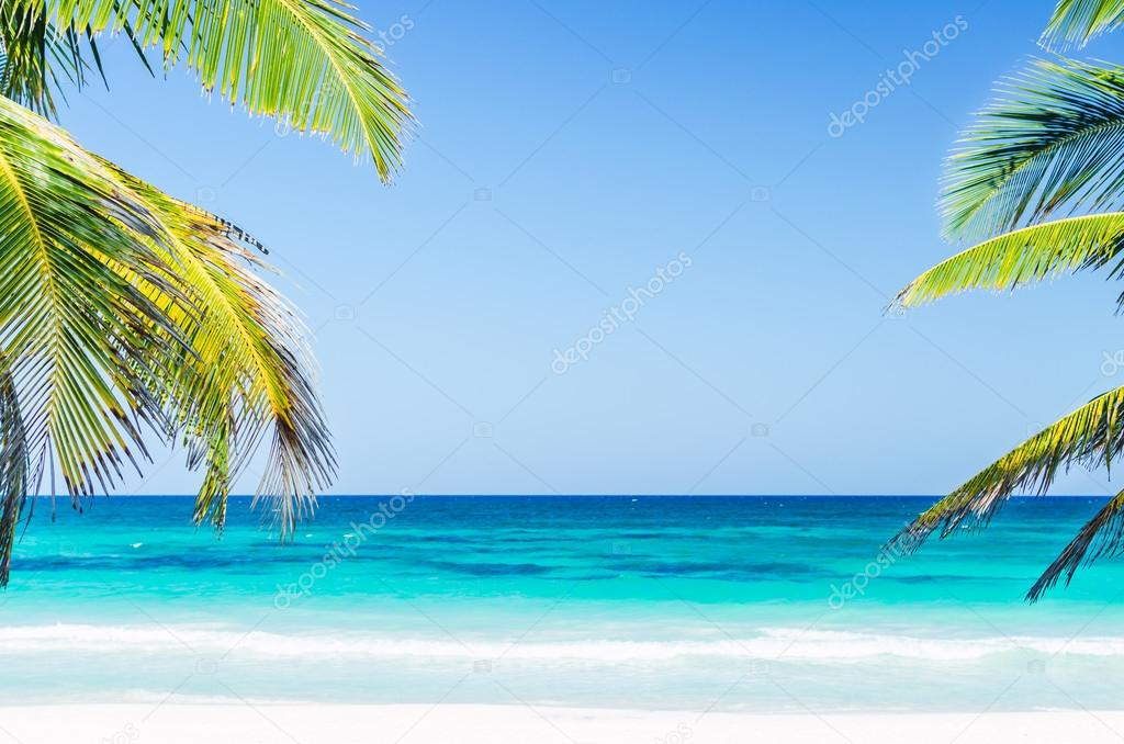 Tropical seaside view and palm trees over turquoise sea at exotic sandy beach in Caribbean sea