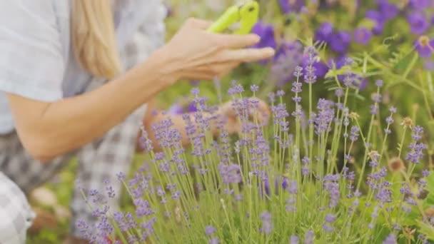 A nő gondoskodik a virágokról.