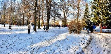 snowy walk in park