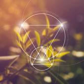 Fotografia Geometria sacra. Matematica, natura e spiritualità in natura. La formula della natura.