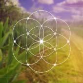 Fotografia Fiore della vita - i cerchi intrecciati simbolo antico. Geometria sacra. Matematica, natura e spiritualità in natura. Fila di Fibonacci. La formula della natura. Conoscenza di sé nella meditazione.